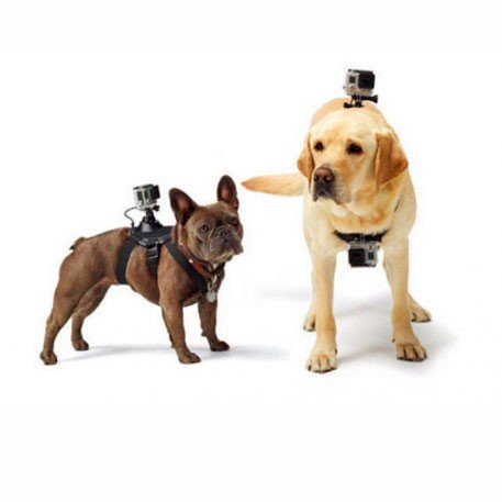 the-keeper-action-camera-pet-mount2